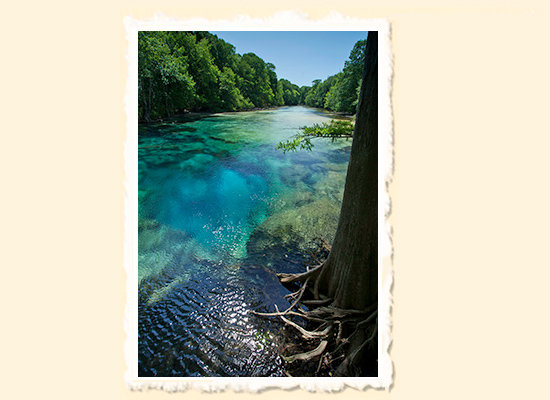 Blue Planet � Cypress Springs