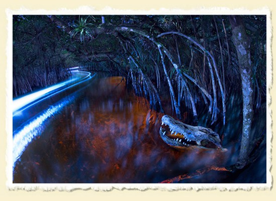 Paddling by Moonlight � The Everglades